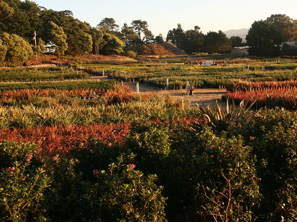 Acres of Inspiration | Pacific Nurseries