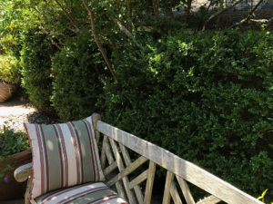Great hedge and screen plants | Pacific Nurseries