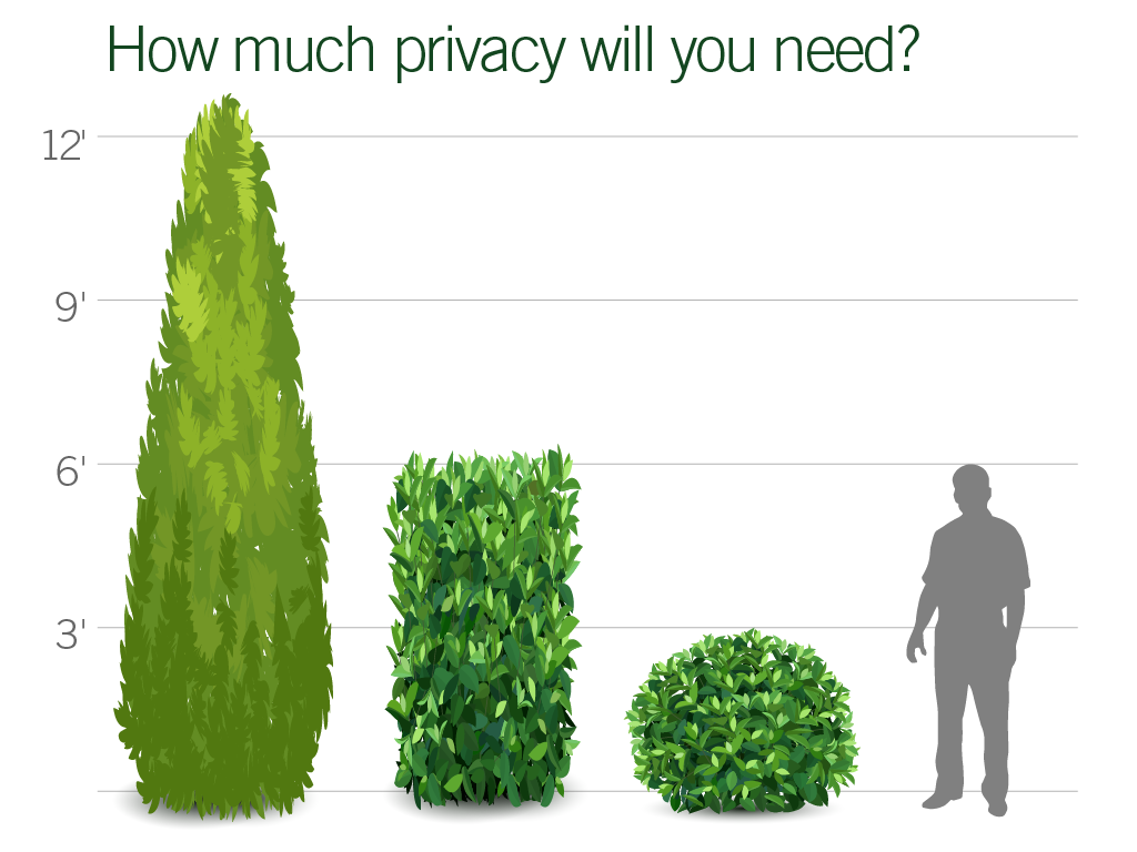 Hedge + Privacy Screen Plants | Pacific Nurseries